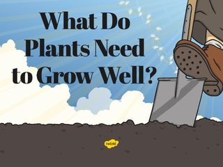 What Do Plants Need to Grow We