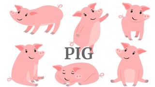 PIG 01