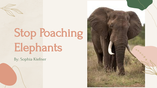 stop poaching elephants