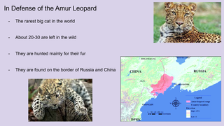 In defense of the Amur leopard