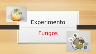 Experimento/Fungos
