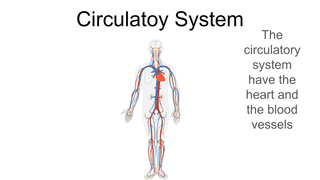 Sistems of the body