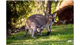 2 Australian animals