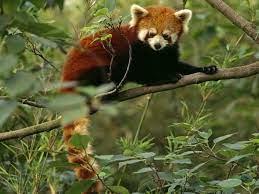 My favourite endangered animal