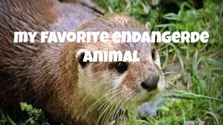 My favourite endangerde animal