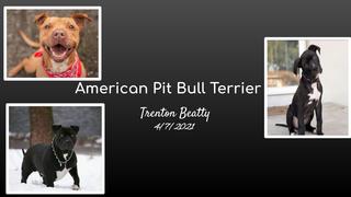 Trenton Beatty - Research Proj