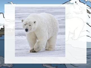 arctic intro 11.1.21
