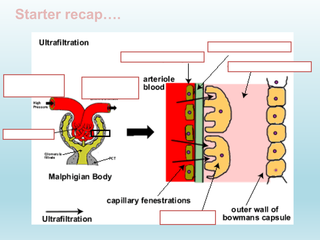 Selective-Reabsorption-in-the-